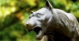 Pitt Panther